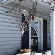 Oiseaux de glace