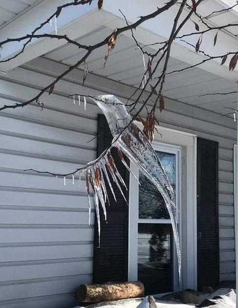 Oiseaux de glace550p
